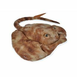 Wild Republic Atlantic Ray Cuddlekin Soft Toy